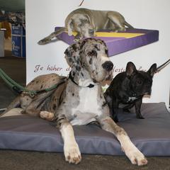 orthopädisches Hundebett Lectus pro canibus® erfolgreich im Einsatz bei älteren und übergewichtigen Hunden, großen und schweren Hunden und zur Vorbeugung / Phrophylaxe bei gesunden Hunden