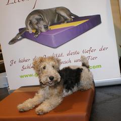 Medizinische Hundekissen Lectus pro canibus aus 100% Viskoliegefläche