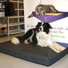 Lectus pro canibus 100% Visko Hundekissen passen sich perfekt dem Körper des Hundes an, entlasten den gesamten Bewegungsapparat und halten die Wirbelsäule immer in anatomisch richtiger Form