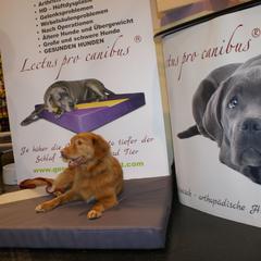 Gesunde Hundebetten Lectus pro canibus zum Wohle der Hunde Gesundheit und zum Erhalt der Bewegungsfreude