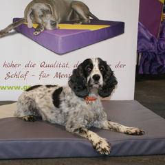 Lectus pro canibus Hundebetten unterstützen die Gesundheit des Hundes