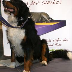 orthopädische Hundebetten Lectus pro canibus für Schmerzlinderung, Muskelentspannung, Druckentlastung und zur optimalen Unterstützung des Bewegungsapparates
