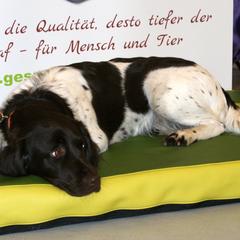 Lectus pro canibus Hundebetten mit der Technologie aus der Humanmedizin mit Tierärzten entwickelt, von Tierärzten und Hundephysiotherapeuten empfohlen