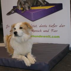 orthopädische Hundekissen Lectus pro canibus® aus dem Hause Gesunde Hundewelt werden ausschließlich aus hochwertigen Materialien und erstklassigem Medizinalschaum hergestellt