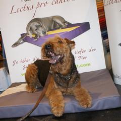Orthopädische Hundebetten Lectus pro canibus dienen auf der einen Seite zur Unterstützung des Rückgrates und der Gelenke im bereits erkrankten oder akuten Zustand.