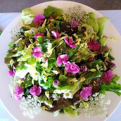 Wildkräutersalat mit saisonalem Blütentraum