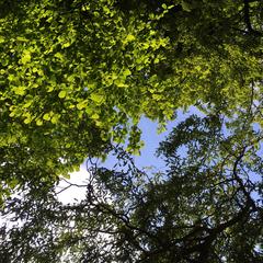 Ciel végétal de printemps à l'Atelier-Jardin, Montlignon. Mai 2017