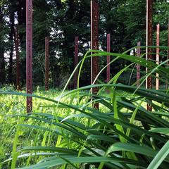 Cercle de Totem-Haïkus en acier brut oxydés à l'Atelier-Jardin, Montlignon. Mai 2017