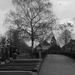 Friedhof, Wien