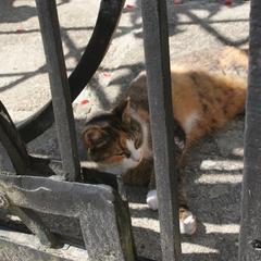 a cats life, Zakynthos
