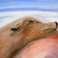 Seelöwe, Pastell auf Papier, 36x48cm, 2014