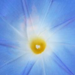 Blüte, Österreich