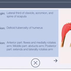 Anatomische Datenbank des ShockMaster 500