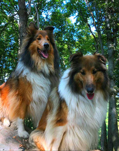 Cash back und Chayenna´s Christal of magig of faithful Gentledogs