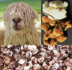 Biologisch abbaubare natürliche Materialien: Alpakawolle, Baumwolle, Taguanuss