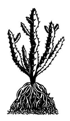 Nina Georgiev Illustration Kaktus