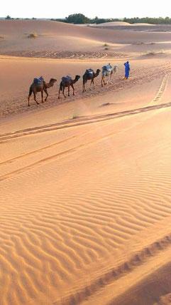 モロッコ/サハラ砂漠でラクダトレッキングがおすすめ♬ 青い街シャウエン在住Mikaのブログ