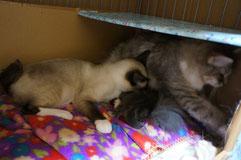 子猫の世話をするふりをするチャム