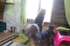 外を眺める猫ちゃん