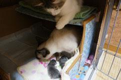 子猫が大好きなチャム