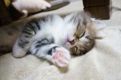 おやすみ♪