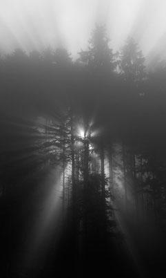 Die Sonne strahlt durch den Wald