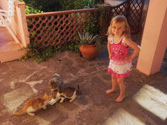 Unsere drei Hauskatzen