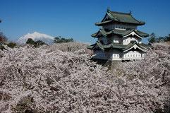日本一の桜と天守
