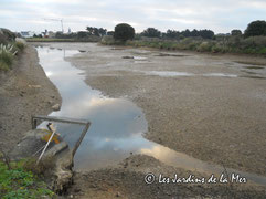 assec de la lagune (focus l'hiver à la ferme)