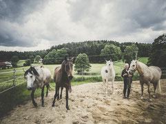 klare Positivonierung - Pferde