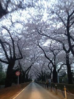 ピーポーパーポさん:東京都港区・青山墓地