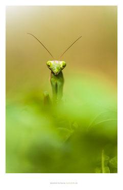 Patrick Goujon Photographe