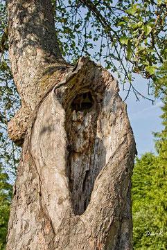 Totholz Stammhöhle deadwood wild bee
