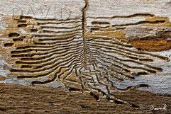 Totholz Fraßbild Borkenkäfer