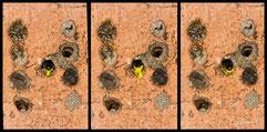 Insektenhotel Nisthilfe Insektennisthilfe gebrannter Ton Scherenbiene