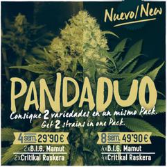 pack semillas feminizadas diferentes variedades, semillas feminizadas marihuana barcelona, big seeds panda duo, bigseeds semillas marihuana, critical raskera, big mamut