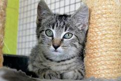 Lou, chatonne de moins de 2 mois