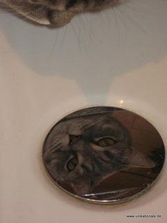 Balou schaut auf den Abflußstöpsel der Badewanne