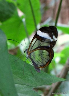 Schmetterling in einem Schmetterlingshaus bei Bremen