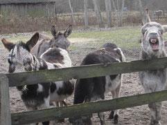 vier Esel im Wendland