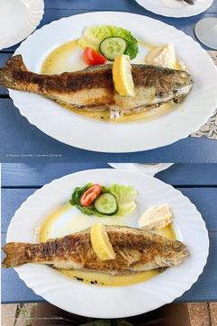 Restaurant mit Saibling (oben) und Forelle (unten) in Wiesner´s Teichwirtschaft