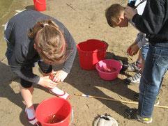 Projekttag einer zweiten Klasse: Lebensraum Wasser