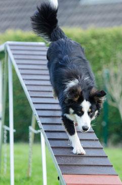 Hundeschule Training für Mensch und Hund bietet wie hier zu sehen auch Agility-Kurse an!