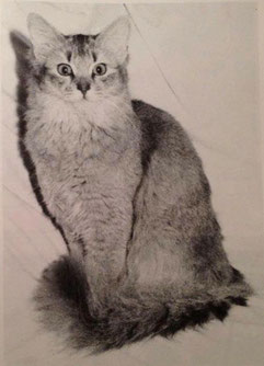 Lili-Pet Forever Amber