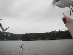約3年前に訪れた松島。力強かったかもめ達。また実際の目で見て感じに行きたいです。