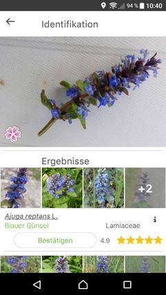 Pflanzenbestimmung via App