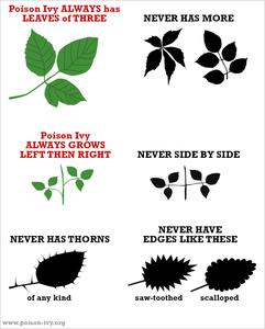 image via poison-ivy.org