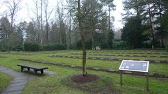 Auf dem Gräberfeld in Ohlsdorf ruhen insgesamt 384 sowjetische Kriegsgefangene aus dem Stalag X A Schleswig und dem Stalag X B Sandbostel, die in Arbeitskommandos in Hamburg verstorben sind. Foto: A. Ehresmann, 2012