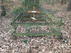 In einem Waldstück bei Neestahl befindet sich das Grab des sowjetischen Kriegsgefangenen Roman Jaschtschuk (27282 XD). Eingesetzt im Arbeitskommando 7027 Kovahl des Stalag X B ist er am 4. Juli 1944 beim Baden in der Elbe ertrunken. Foto: C. Both, 2020