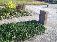 In einem Einzelgrab ruht ein russischer Häftling aus dem Gestapo-Gefängnis Oldenburg. Er wurde im April 1945 auf einem Räumungsmarsch von Oldenburg nach Kiel bei Rhadereistedt erschossen. Foto: T. Grunenberg, 2018